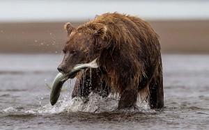 Что делать при встрече с медведем, Neruchi hunting grounds